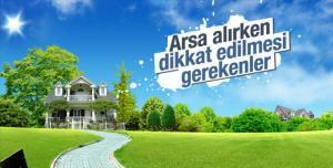 Arsa Alimi